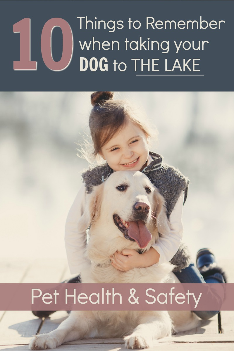 10 things to remember when taking your dog to the lake; pet safety on the water; traveling with dogs; lake house