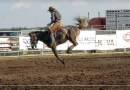 Horse dies at Pro Rodeo; despite fatal injury Ag Society says rodeo was a success