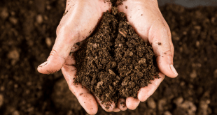 Free Compost Days in Cold Lake nearing an end for 2021