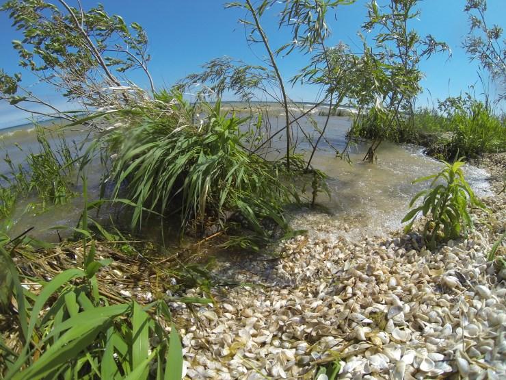 Littoral zones are marshy, weedy shorelines.