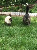 Two happy kitties