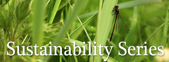 Sustainability Series category