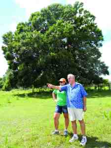 Neighbors Debbie Lane Goodman and Eddie Midili survey tree trimming work Duke Energy has performed along a line route that crosses 20 Mile Level Road in Land O' Lakes. The oak tree behind them is slated to come down next, which has riled up Goodman, Midili and other neighbors. (Michael Hinman/Staff Photo)