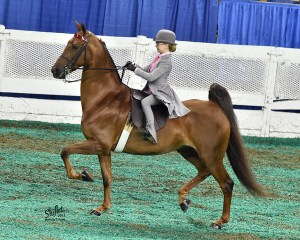 Reagan Moore went to Kentucky to compete at the World's Championship Horse Show, along with her partner, her American Saddlebred, Pearl. (Courtesy of Doug Shiflet Photography)