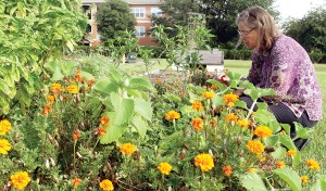 Marigolds fill the foreground as Judy Curran checks the variety of plants, vegetables and flowers planted in the community garden of the New River Branch Library. Curran, and about a dozen adults and children, tend the garden. (Fred Bellet/Photos)