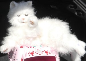 """Tallulah is a robotic cat that purrs and meows as it rests on a purple pillow, when Denny Mitchell begins his musical tribute to cats, """"All About Cats."""""""