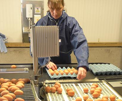 Egg Process