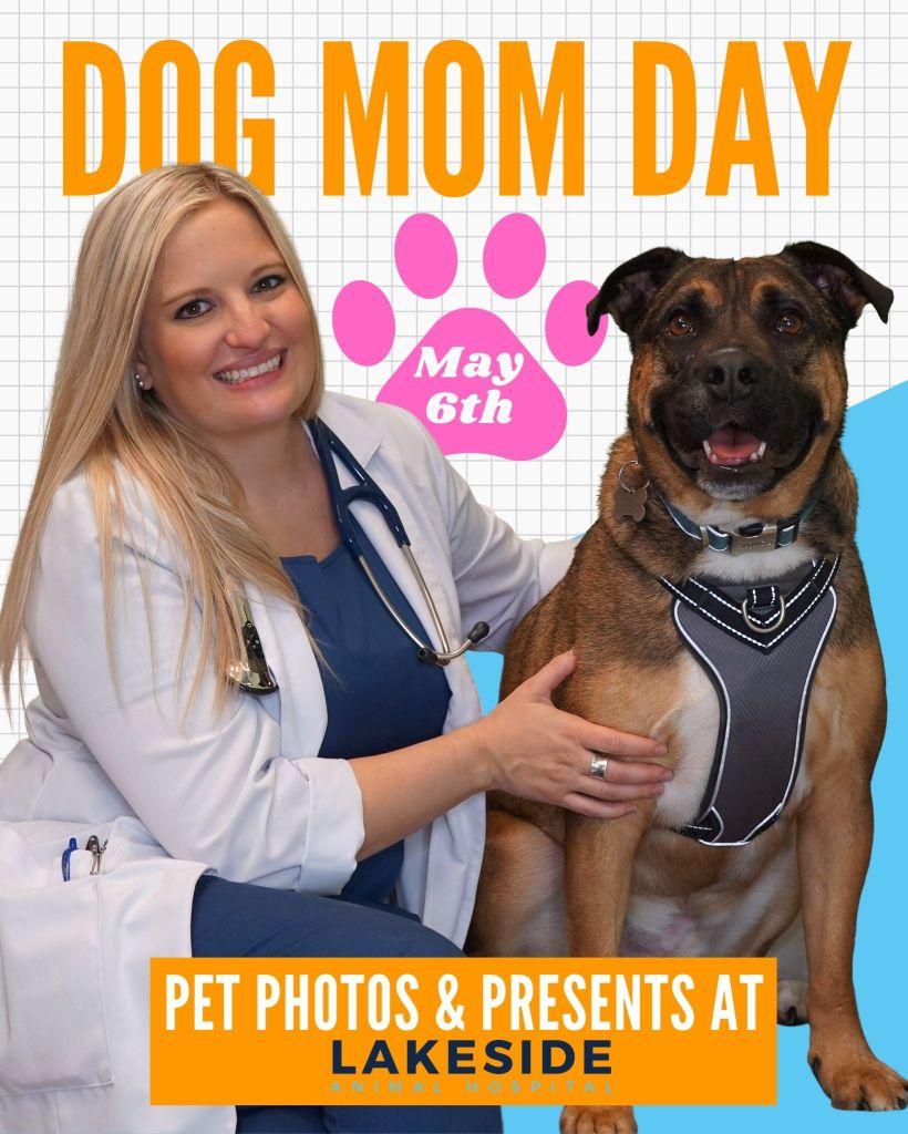 Pet Photos at Lakeside Animal Hospital