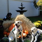 four dogs sitting in fall decorations