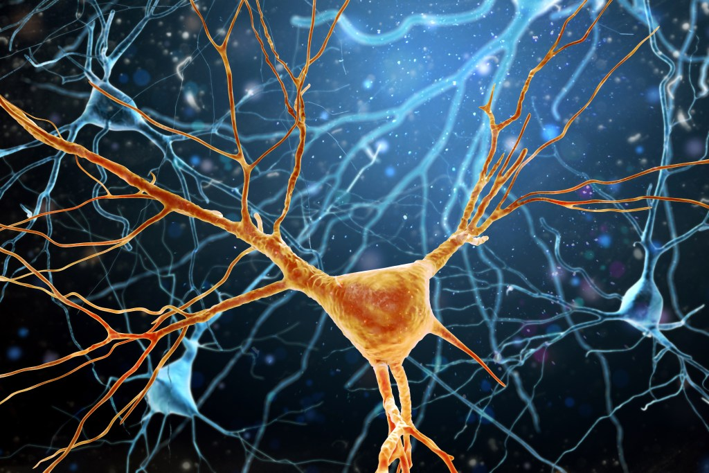 3D Illustration of Human Brain Neurons structure.