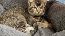 Pet Network Humane Society Has Kittens That Need You!