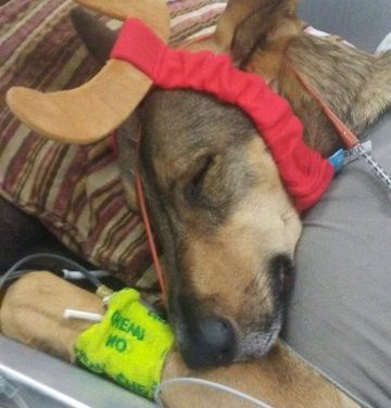 SLTPD Steps in to Save Gravely Injured Dogs