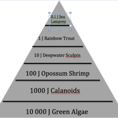 Mercury Energy Level Diagram Wiring For Toyota Radio Flow/interactions - Lake Superior Ecosystem