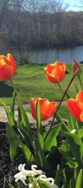 """""""Spring"""" - Michelle"""