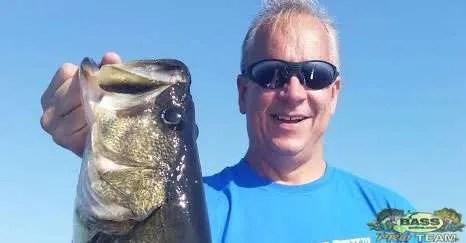 Big Numbers of Largemouth Bass In Lake Toho