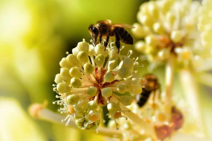 Bees_004