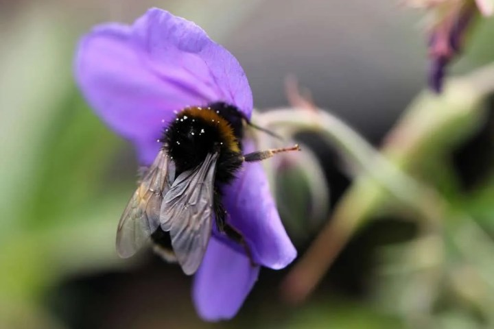 Bees_009