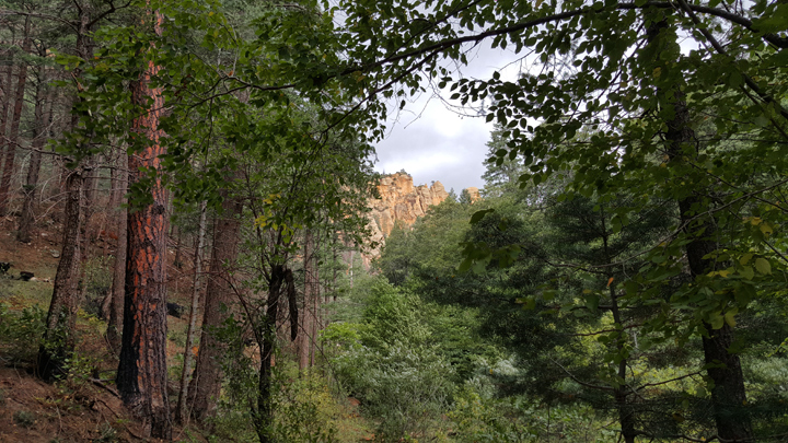 West Fork Trail, Oak Creek, Sedona, Arizona
