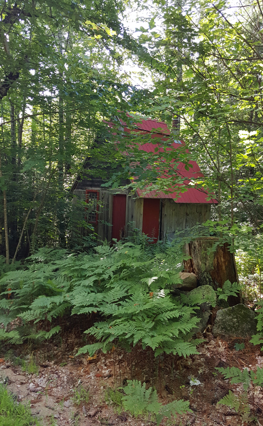 red-roofed forest cottage