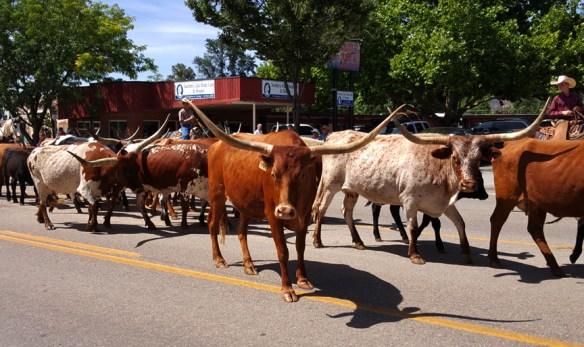 longhorn cattle Western Legends Parada