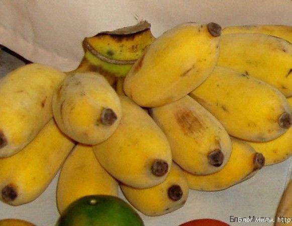 плюшевые тайские бананы kluay nam wa
