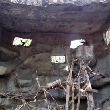 Зоопарк Кхао Кхео мелкие обезьяны