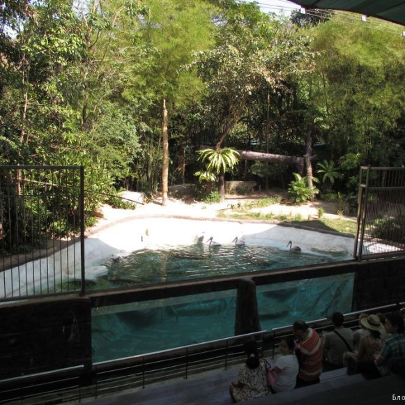 Зоопарк Кхао Кхео шоу