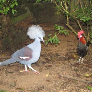 Зоопарк Кхао Кхео вольер птиц