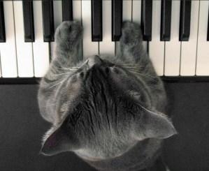 Comment composer un morceau : Rêverie d'un chat