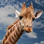 キリンの赤ちゃん(上野動物園)はいつ見れるの?公開日と観覧時間について調査!