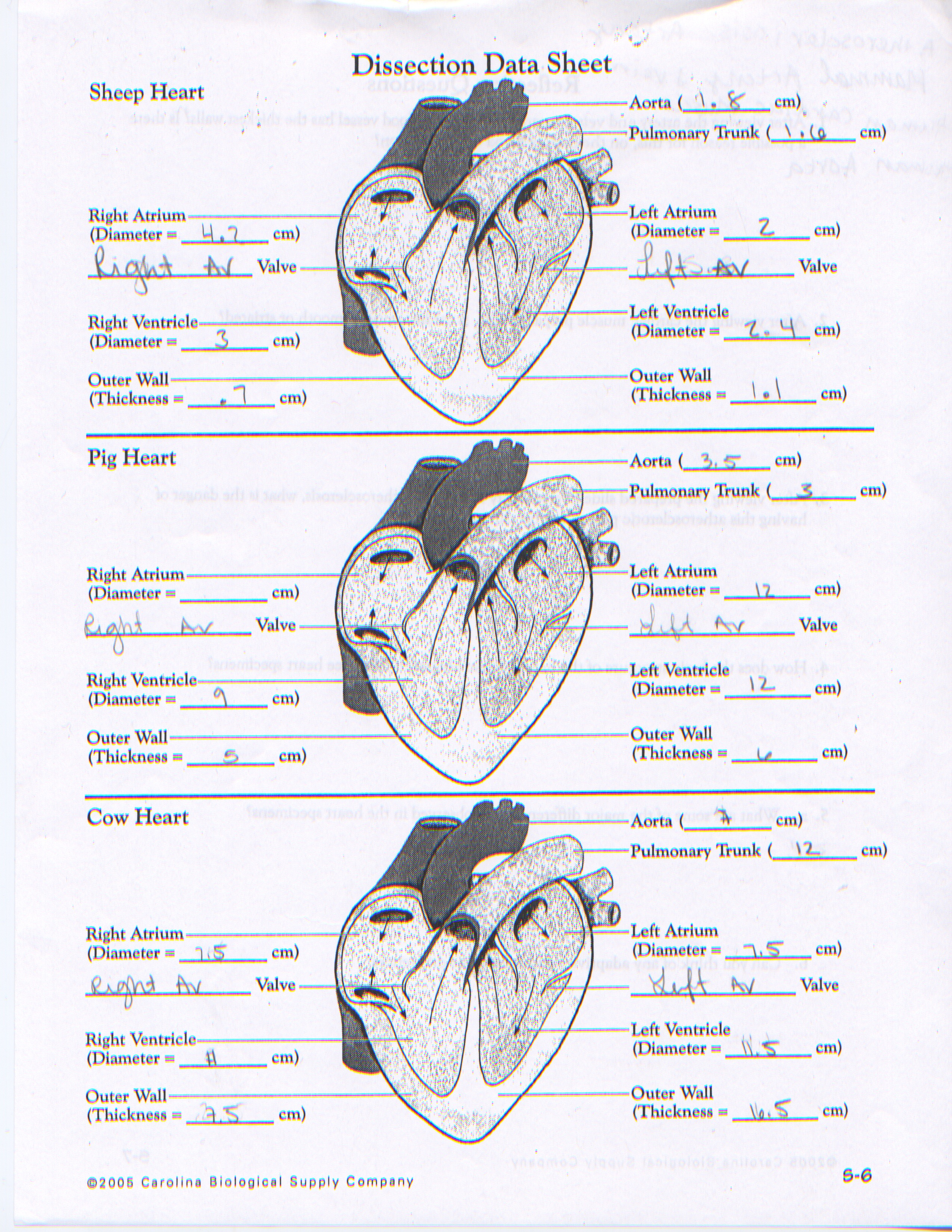 Dissections Anatomy And Physiology
