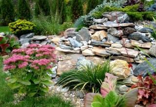 Как выбрать растения для альпийской горки? Цветы для альпинария.