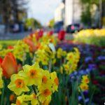 10 planes primaverales para hacer en Múnich