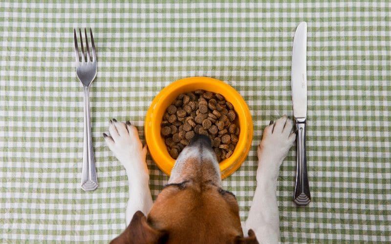 unhealthy dog food