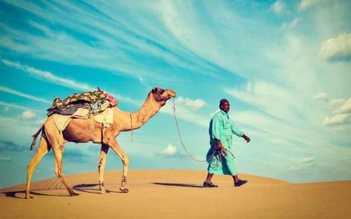 rajasthan camel tourism