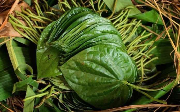 paan betel leaf