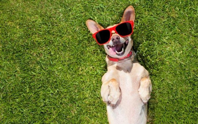 happy dog with glares