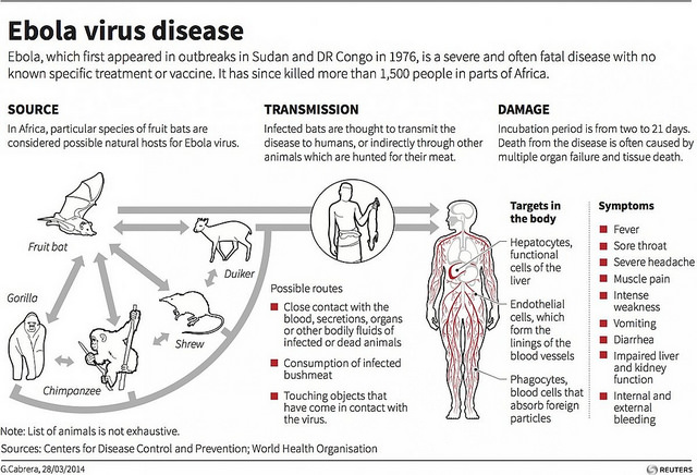 More About Ebola