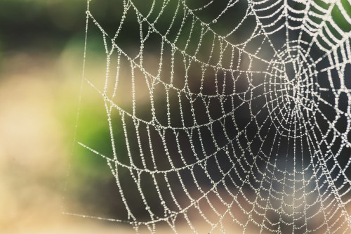 Spider silk as seen in a spiderweb