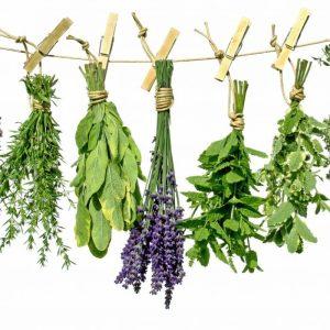 Aromatique & Condiments