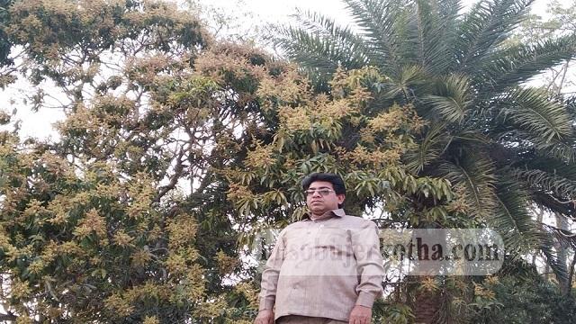 দেবহাটা অঞ্চলের আমগাছগুলোতে মুকুলে ভরে যেতে শুরু করেছে, চলছে ফলন বাড়ানোর কাজ