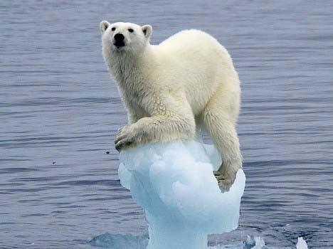 ours polaire al gore