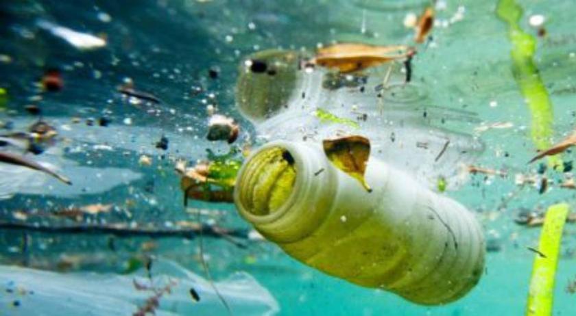 pollution marine si vous mangez du poisson vous ingerez du plastique
