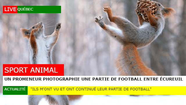 ecureuilfootball