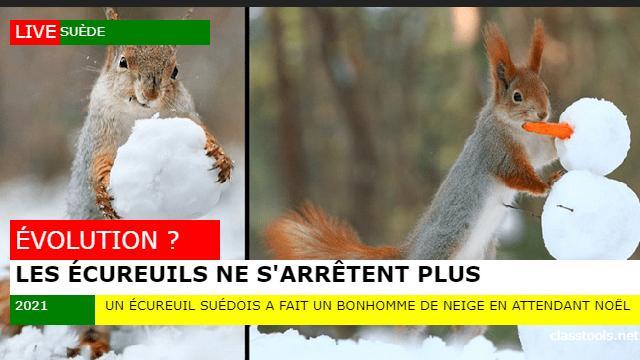 ecureuilneige