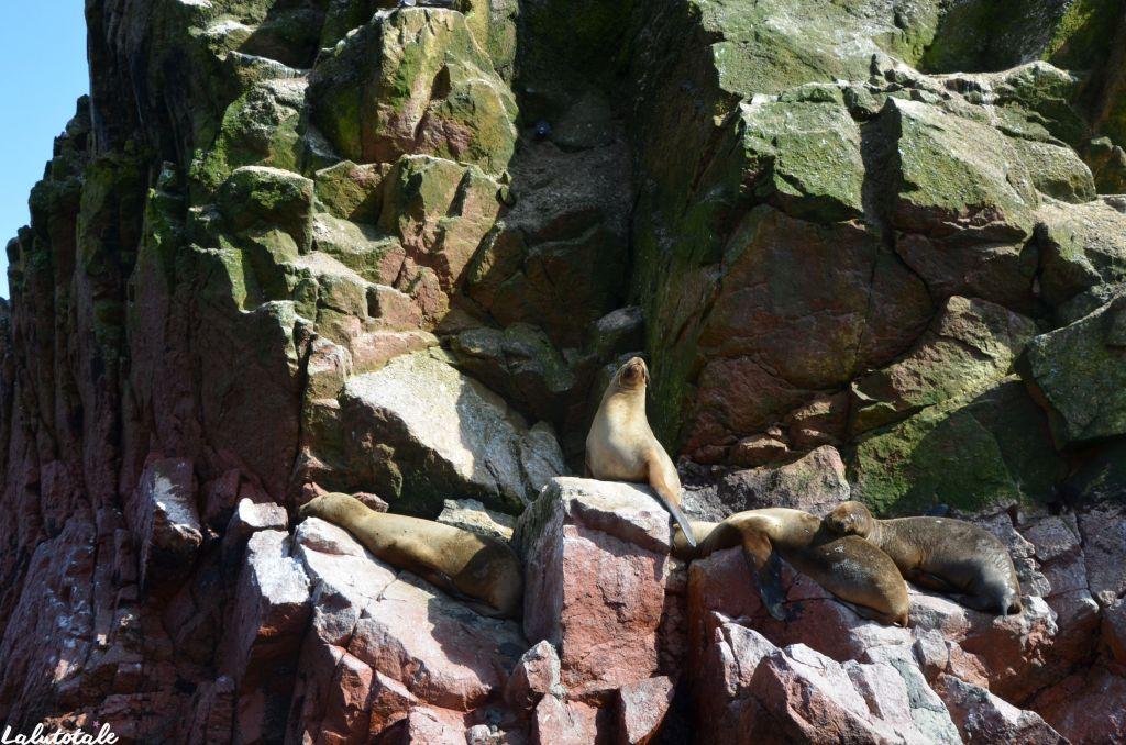 Pérou voyage circuit îles Ballestas réserve naturelle Paracas Pisco