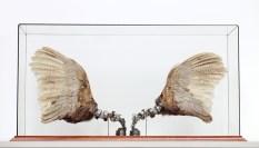 Lisa Black - Fixed Pheasant Wings