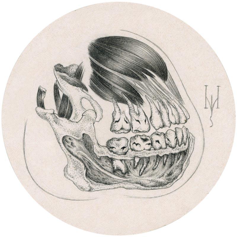 La Luz De Jesus   Miso – Microscopic Anatomy Alveolar Bone