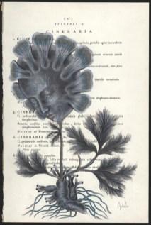 Donna Abbate - A Spoken Flower page 25