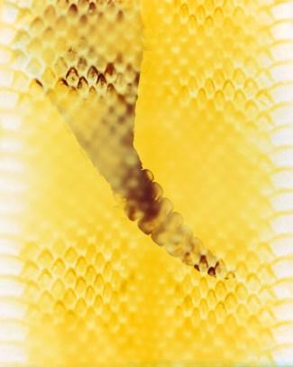Doug Fogelson - Rattlesnake
